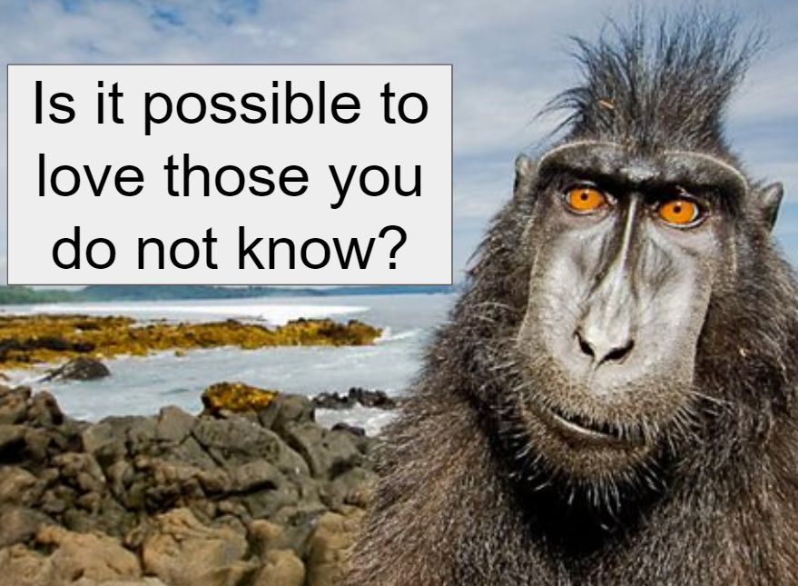 "Image of primate w caption ""Is it possible to love those you do not know?"""